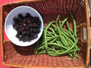 Blackberries and green beans from our own garden
